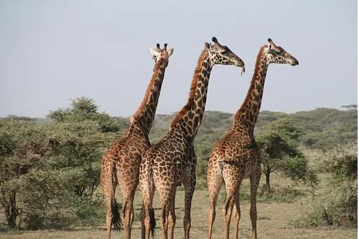 Que trouver en Tanzanie pour penser y passer un séjour ?