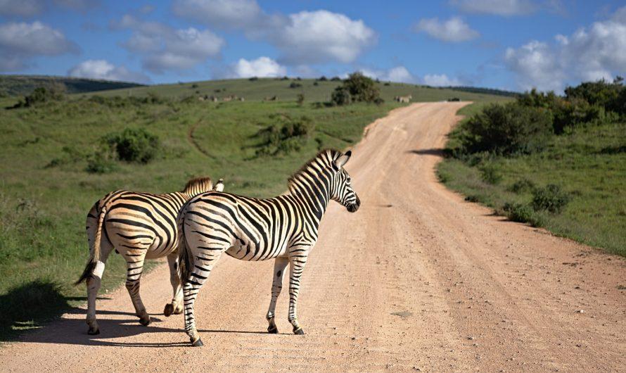 Astuces et infos pratiques pour un premier voyage en Afrique du Sud