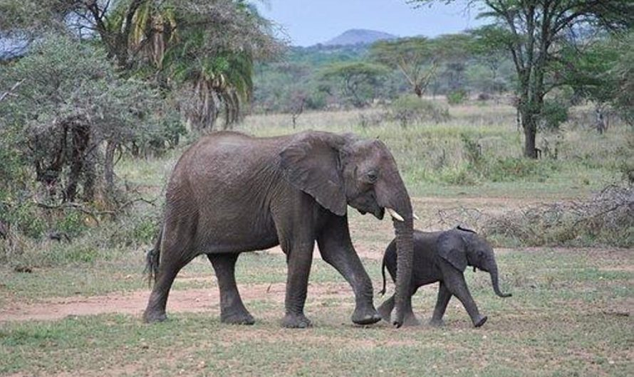 Les points à retenir pour organiser un safari en famille à Serengeti