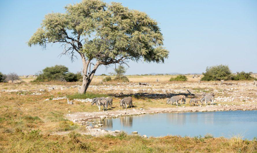 Sélection des destinations à découvrir avec sa tribu en Namibie